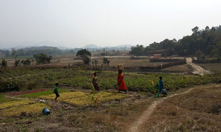 The Rice Harvest at Dayalu Baba's Ashram